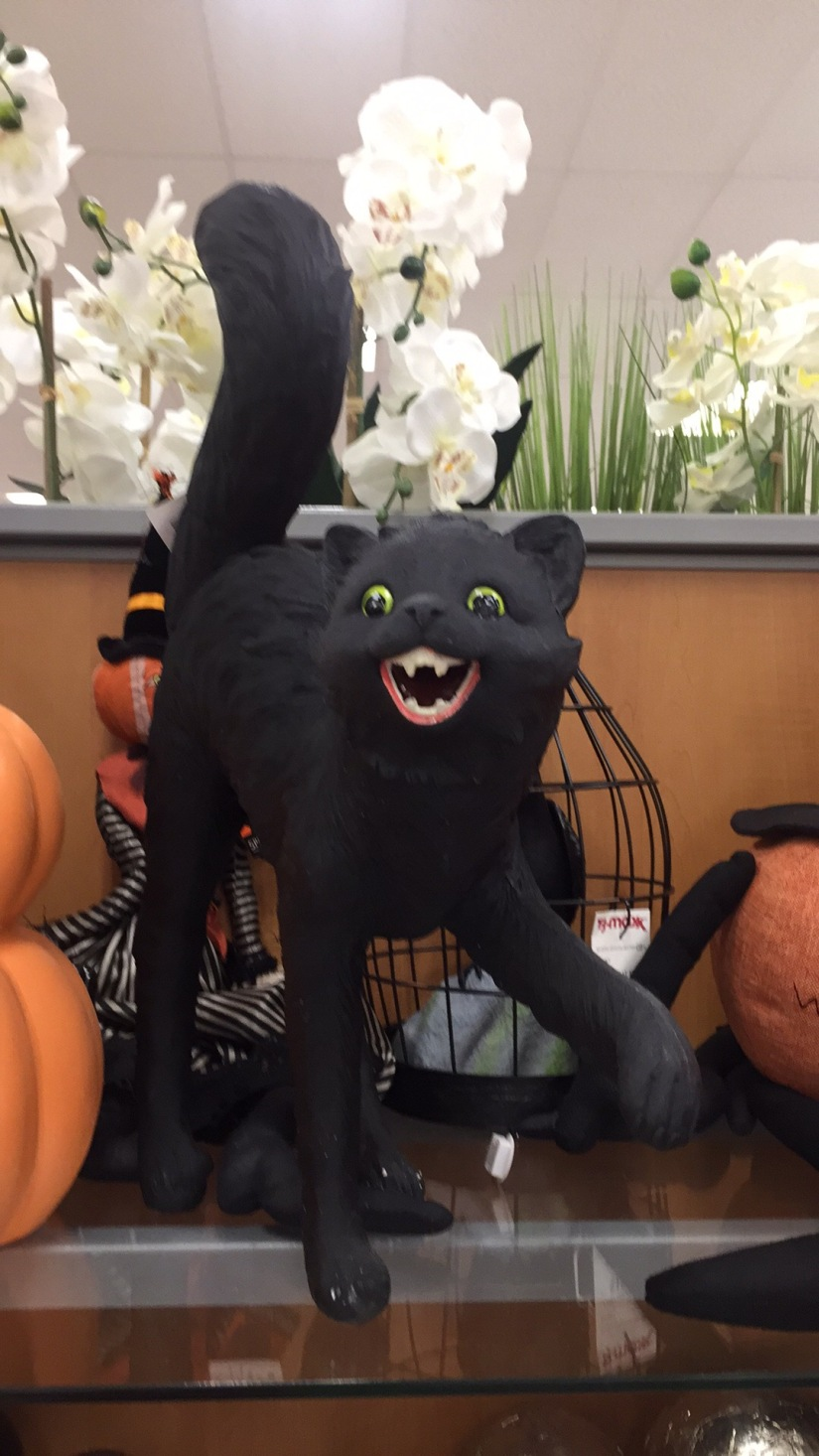 black cat at TJ Maxx