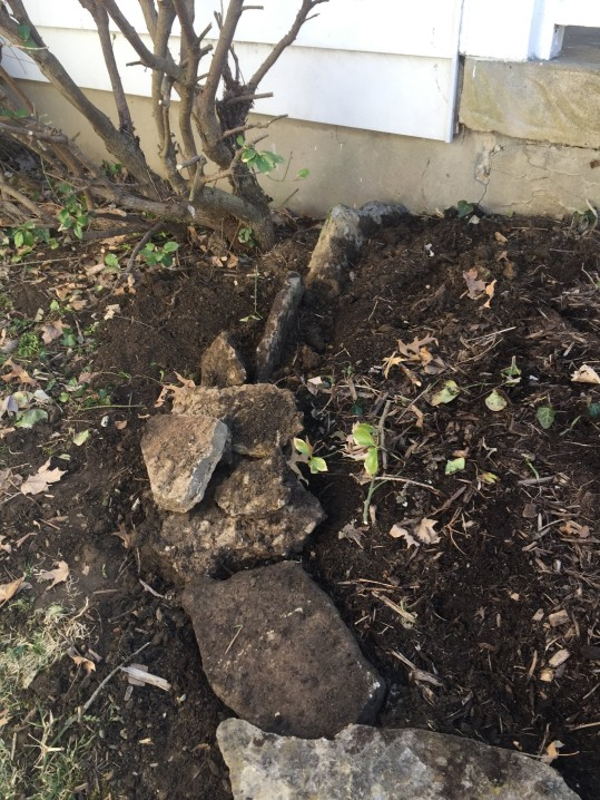 Pulling out rocks to reset the edging.