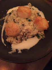 Scallops on mushroom risotto
